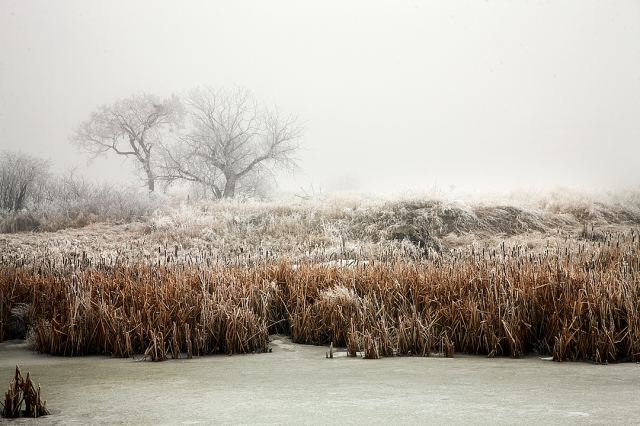 Foggy Pond Sugar Maker