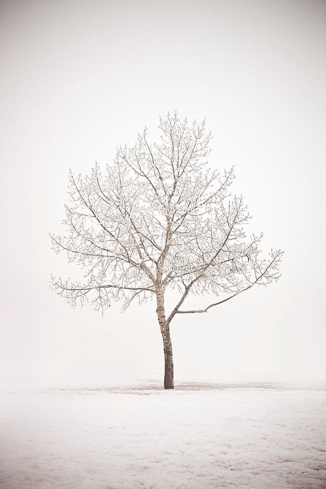 Foggy Tree Sugar Maker