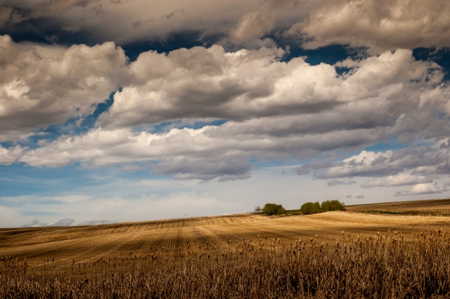 Farmer Field13 LR