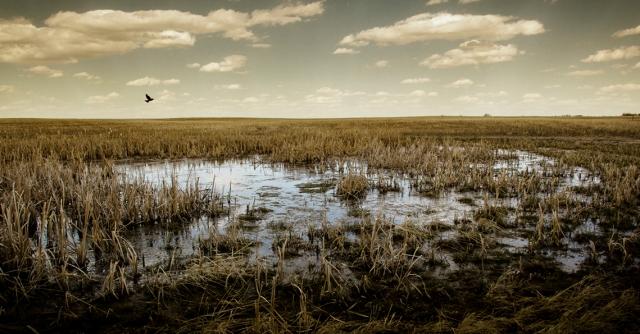 Marsh5 LR
