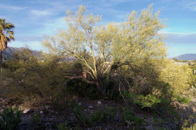 Tucson Day 1-7