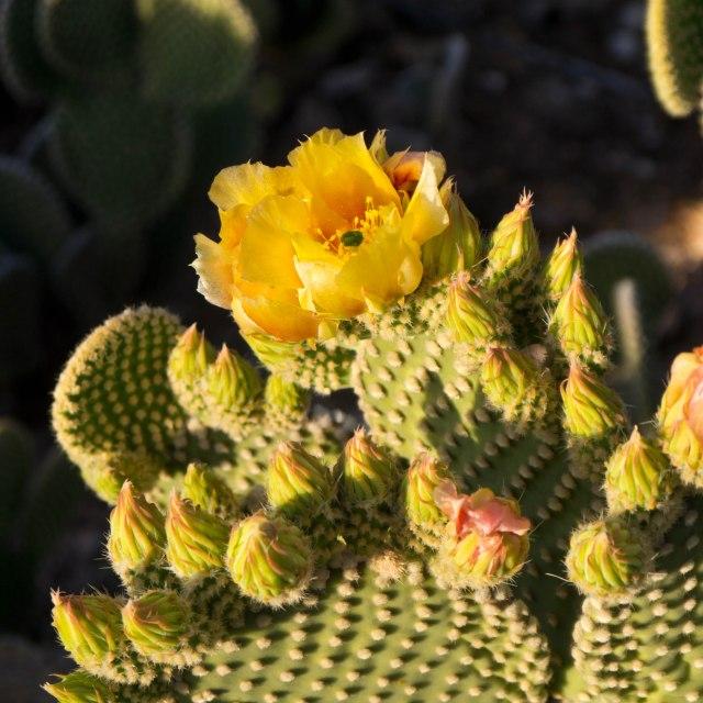 Tucson Day 1-9