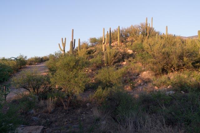 Tucson126